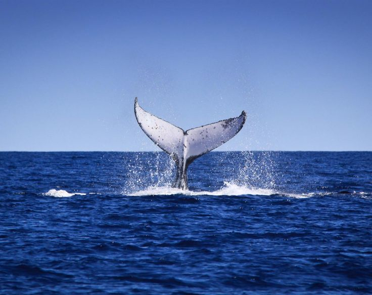 Western Australia has one of the longest whale watching seasons in the world, following the annual whale migration from Albany to Broome and the Kimberley.
