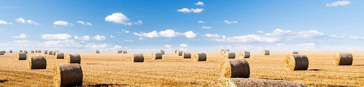 Möchten Sie Landesprodukte, Stroh bestellen oder Hackschnitzel kaufen?Dann sind Sie bei Frei Dominik und Frei Jörg genau richtig. Das Landwirtschaftliche Lohnunternehmen und Transportunternehmen in der Ostschweiz besteht seit 2006.Seit dem beschäftigen sich mit dem Heu und Strohhandel in der Schweiz und auch mit Landwirtschaftliche Transporte, Traktortransporte und Brennholzhandel.