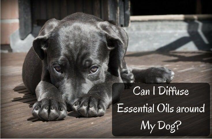 Can Claim My Dog Social Welfare