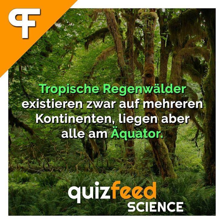 Tropische Regenwälder existieren zwar auf mehreren Kontinenten, liegen aber alle am Äquator.  Tropische Regenwälder benötigen die Klimazone der Immerfeuchten Tropen. . Folge @quizfeed - 'Wissen clever verpackt'