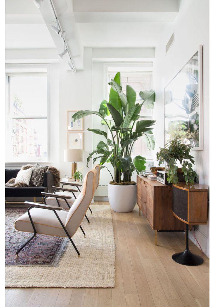 Banenenplant, de nieuwe plant trend?