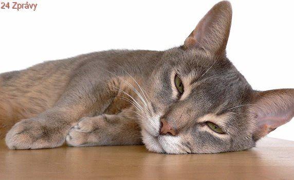 Tichý mír mezi kočkami a lidmi? Jak nejoblíbenější domácí mazlíčci dobyli svět