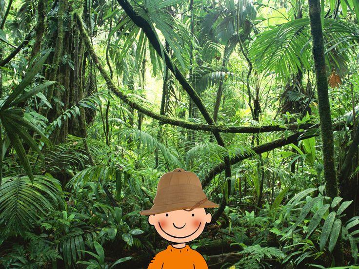 Jules in de jungle. Thema 'het regenwoud'. Het eerste klasje.