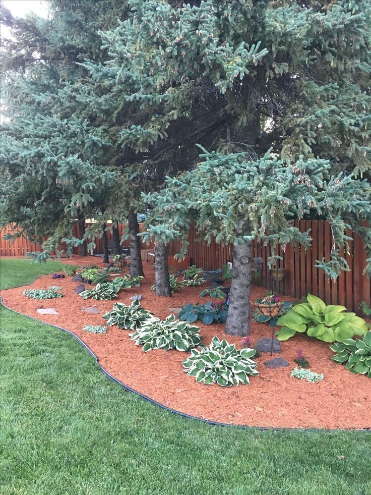Planting Ideas For Under Pine Trees Pine Straw Landscaping Backyard Trees Pine Garden