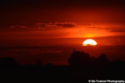 TUDOR  PHOTO  BLOG: 21 iunie - Ziua Mondiala a Soarelui, 21 june - Int...