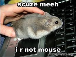 The Superior Mind Man vs. Mouse: Mice, Scuze Meeh, Aww, Window, Funny Stuff, Dwarfs Hamsters, Funny Animal, Heheh, Mouse Care
