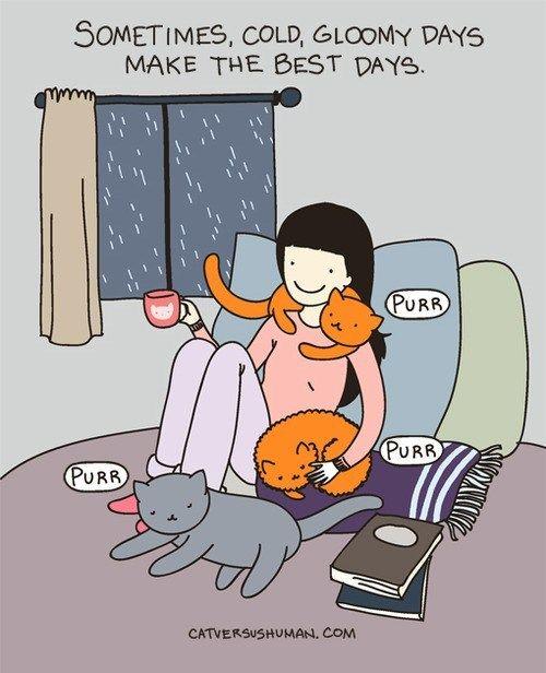 INFJ libros gatos mascotas