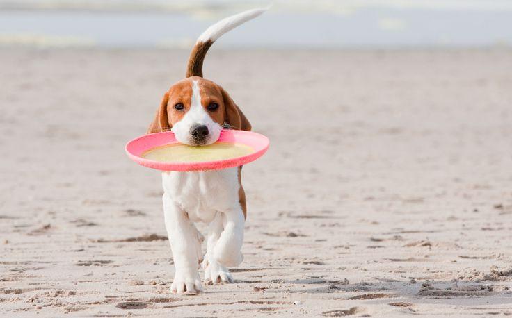 Die Hundestrände an der Ostsee - so schön ist Urlaub mit Hund (c) Travemünde Tourismus   Ein bisschen Ostseeluft schnuppern? Fischereihafen, Leuchttürme, Strandkörbe & Meer... Ein besonders tierischer Tipp ist Travemünde mit eigenem Hundebadesteg und Mini-Strandkörbe für das Wauwi an den Hundestränden, Hundefreilaufstrecken & hundefreundlichen Ausflugszielen... Soooo WAUUUU :)))  #urlaubmithund #ostsee #ostseeurlaub #hundeurlaub #hundefreundlich #hundestrände