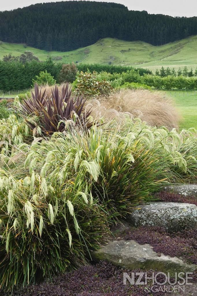 31 Best New Zealand Native Gardens Images On Pinterest