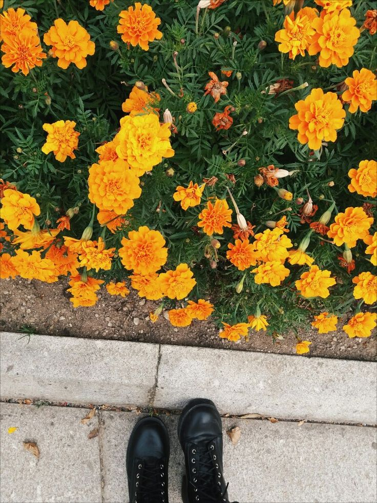 #flowers #boots #fashion #fall #byme #blogger