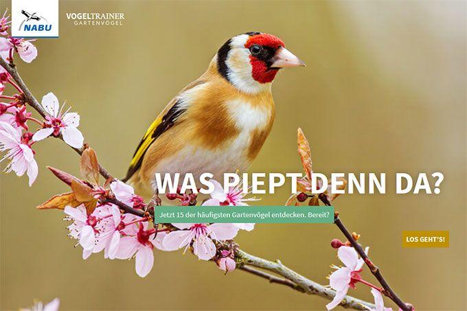 Vogeltrainer Gartenvogel Neu Vogel Im Garten Vogelarten Vogelkunde