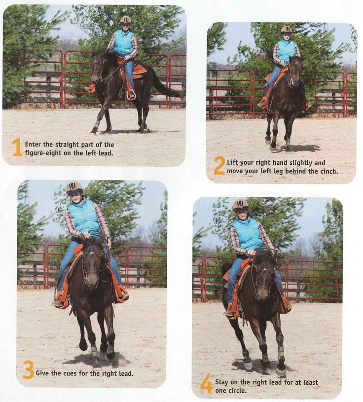 how to change lead legs on ahorse