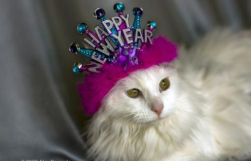 Cats & Dogs in New Year's Hats - The Laughing Stork - The Laughing Stork
