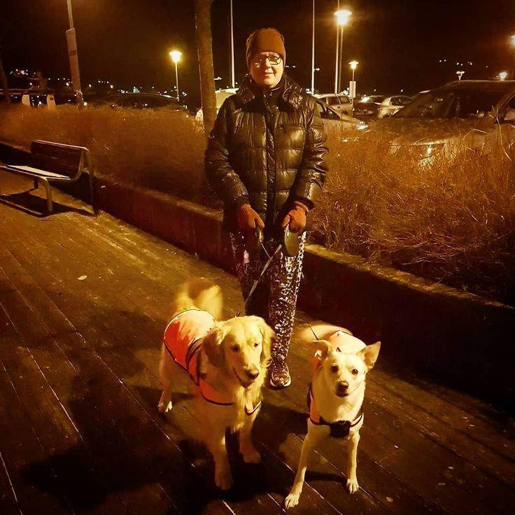 Det var 2 nydelige gutter som trengte tur i dag  Til og med i matchende jakker  #hund #oliverthedog #bonzo #buhund #goldenretriever #bestevenner