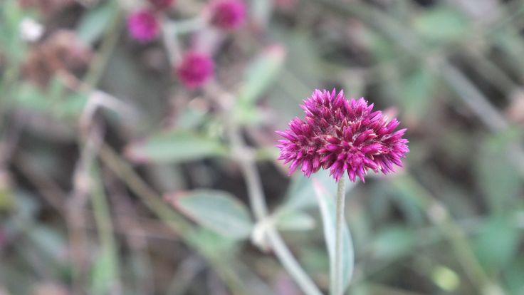 Verano en lilas - Chile