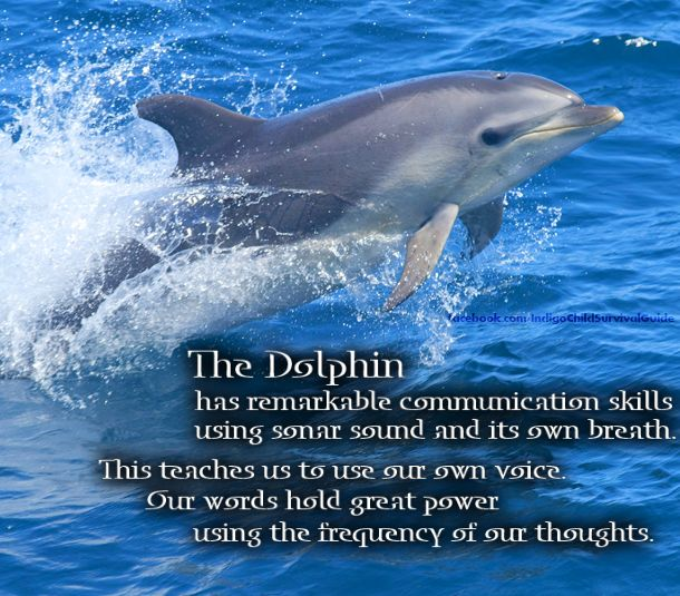 The Dolphin represents the power of communication. Reminding us to speak with our own voice.