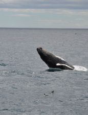 Dee Jay Charters - sightseeing, boat tours St John's NL, whale watching, birds,icebergs puffins