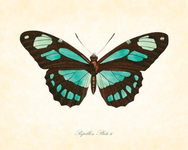 Vintage Butterfly Series 2 Papillon Plate 6 Art Print 8x10 Natural History Home Decor. $10.00, via Etsy.