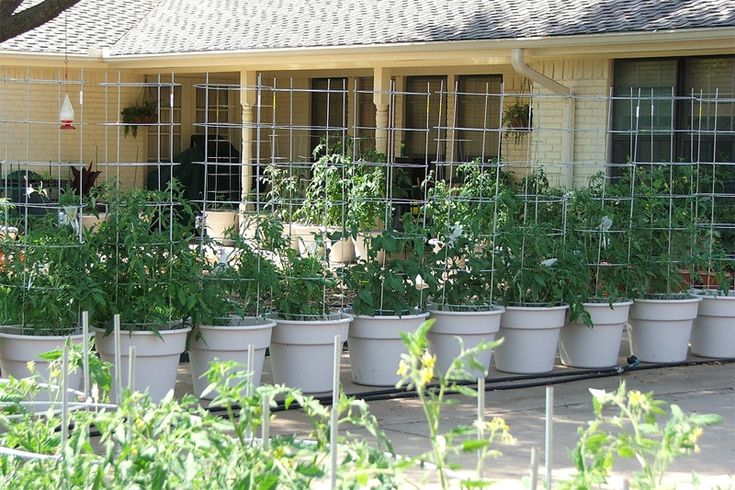 Container Vegetable Gardening In South Texas