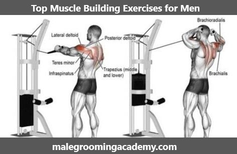 Top Muscle Building Exercises #Fitness #Health #Life #Love #diet #quote