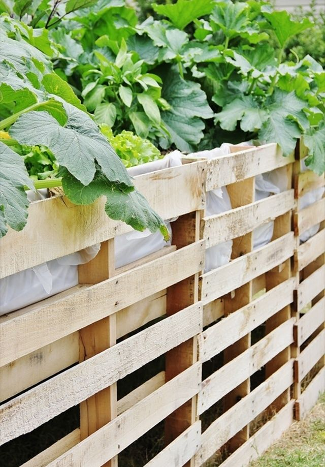 82 best pallet gardens images on pinterest pallet for Gardening using pallets
