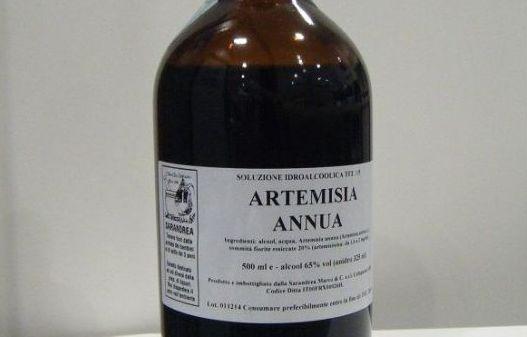 Artemisia Annua: rimedio contro il cancro