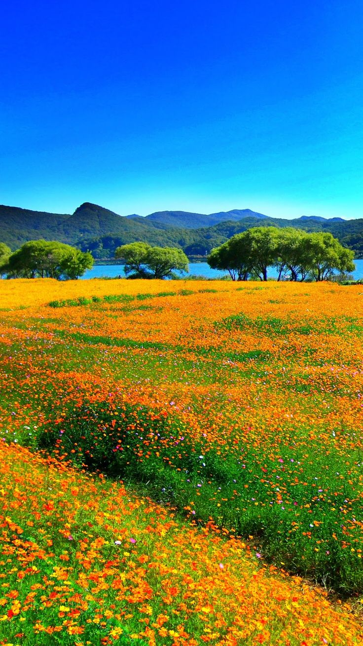 Flowers with mountains and water in the distance
