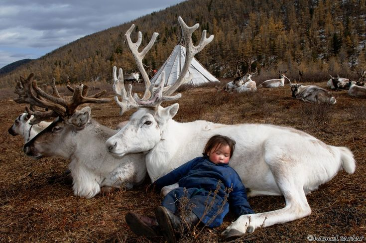 Reindeer's make good pillows ~ so cute! :-)) by Hamid Sardar-Afkhami