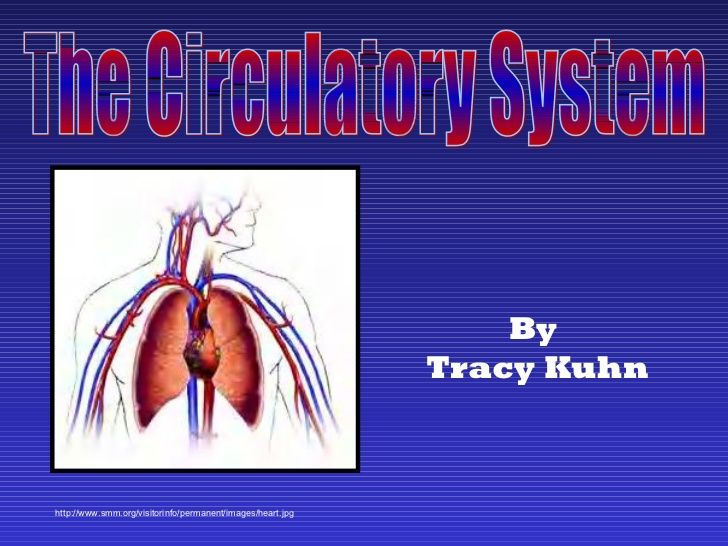 Circulatory system slide show by Tracy Kuhn via slideshare