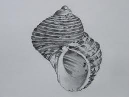 pencil shell drawings - Google Search