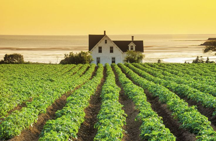 "PEI. The Canadian island that inspired ""Anne of Green Gables"".  A farmhouse surrounded by rows of potato crops in DeSable."