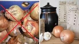 L'Ultime Solution pour conserver l'ail et les oignons pendant une très longue Période !