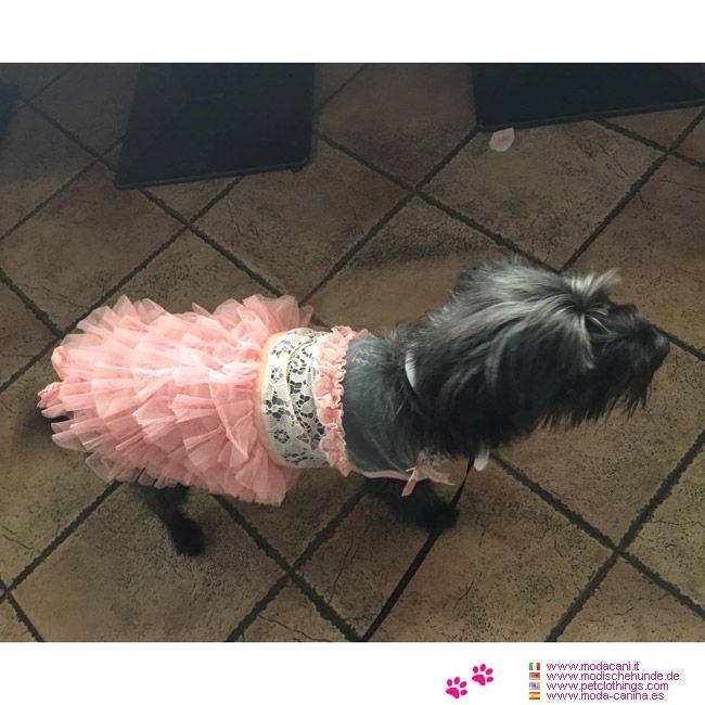 Rosa Kleid für Hochzeiten für Chihuahua und kleine Hunde #Hunde #Yorkshire - Rosa Kleid für Hochzeiten für kleine Hunde (Chihuahua, Zwergpudel, Pudel, Maltesisch,...) sehr chic, mit Spitzen auf dem Mieder und zerzauste Tüllrock