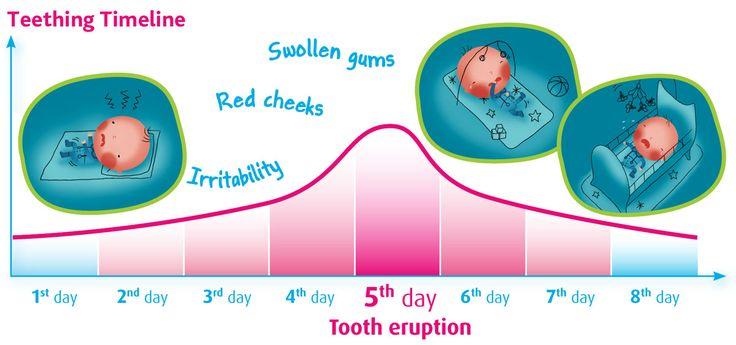 Baby Teething Chart, Teething Timeline & Teething Symptoms, Camilia