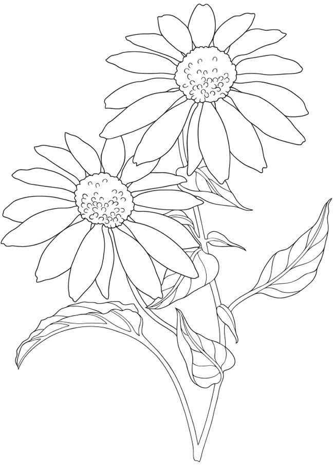 creative haven how to draw garden flowers doverpublications