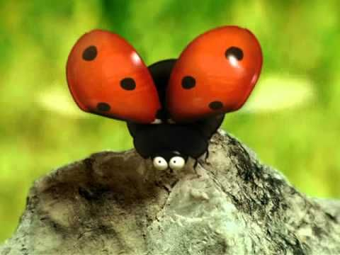 Minuscule - Love Story - ladybug searches for love