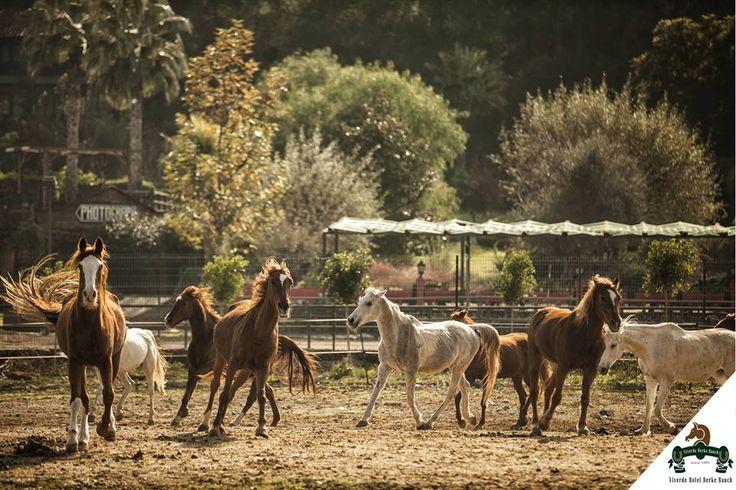 Özgürlük en güzel yaşam tarzıdır, özgür bir ortam için #Viverde #Hotel #Berke #Ranch #Kemer #Horse #Riding