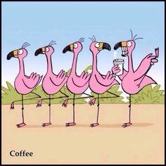 Flamingo on Coffee