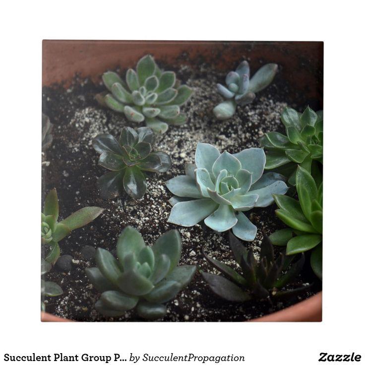 Succulent Plant Group Photograph