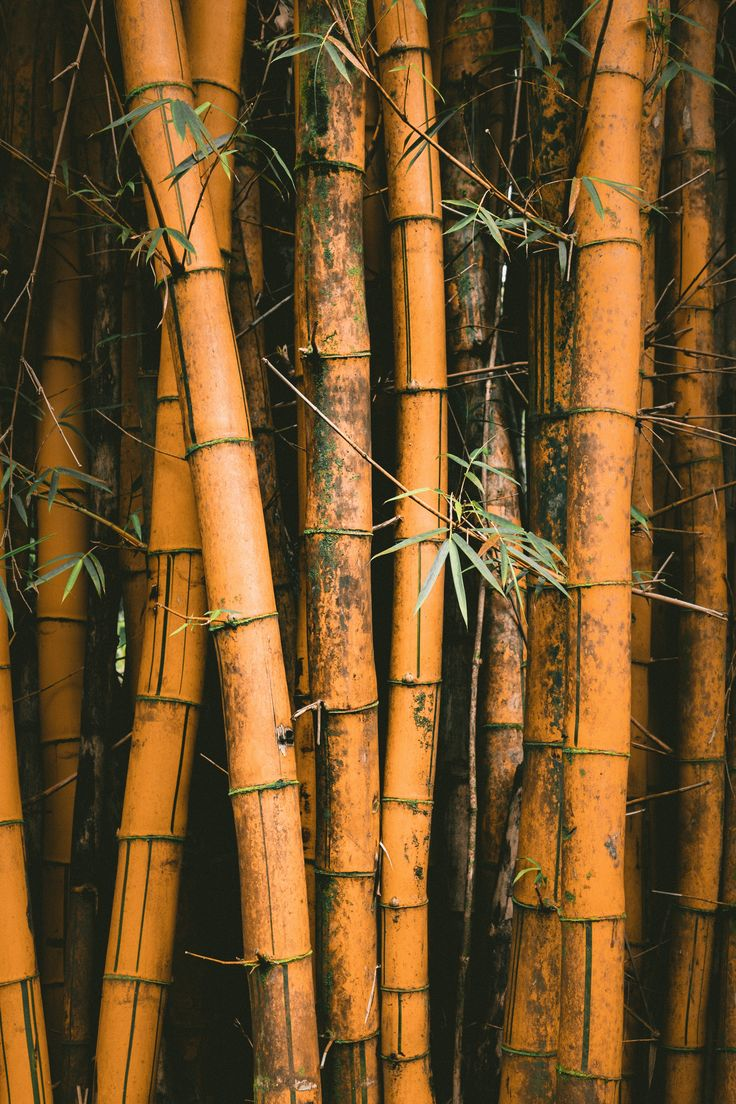 Plants | 100+ best free plant, green, leaf, and cactu photos on Unsplash