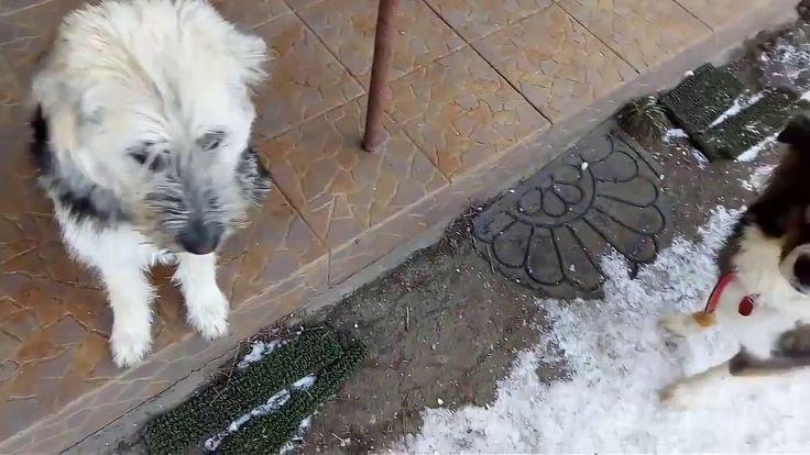 Die Besten 25 Tierheim Andernach Hunde Ideen Auf Pinterest Tierheim Andernach Tierheim