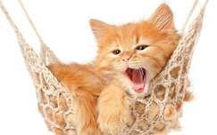 Macska háttérképek - 3. oldal