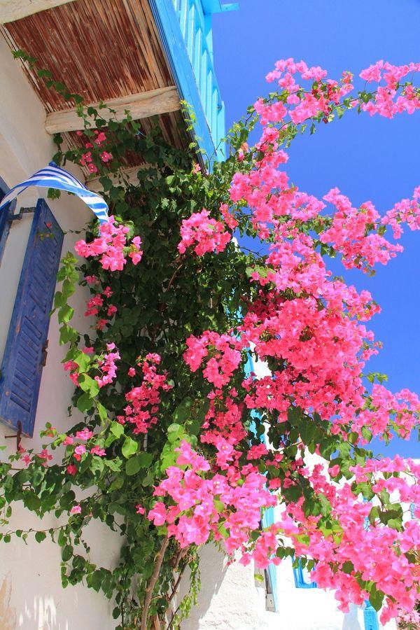 The Beauty of Greece by Laura Payne, via Behance