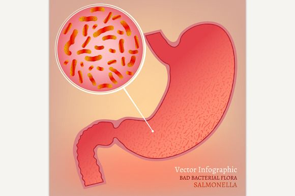 Vector Stomach Image by Double Brain on @creativemarket