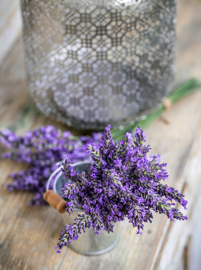 Bundle of lavender flowers by Grafvision photography on @creativemarket