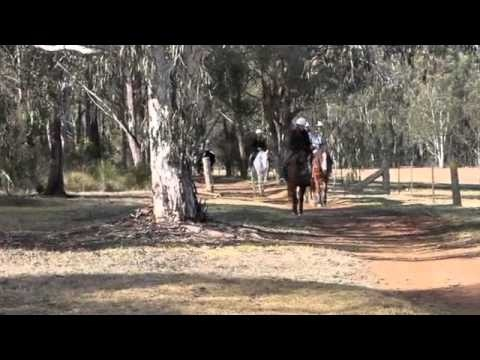 Horse riding in the Blue Mountains on an ecotour. Check this video