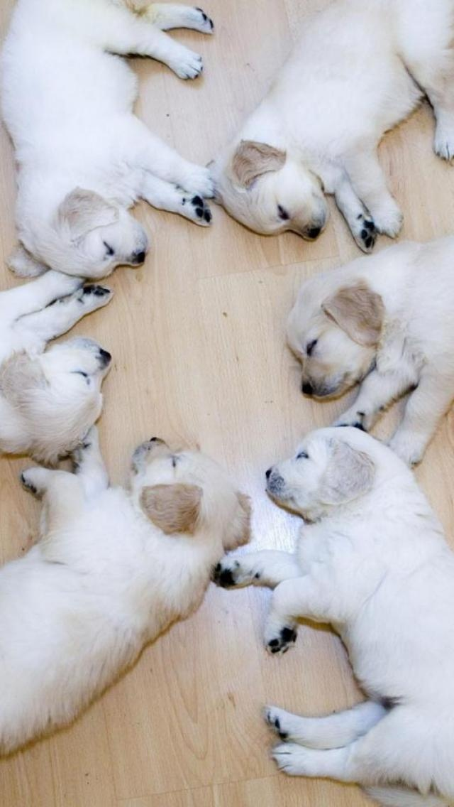 Certainly quiet for a bunch of baby puppies