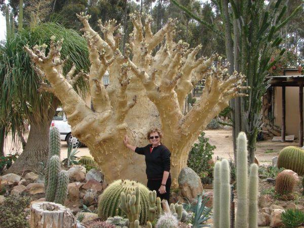 431 best Desert garden plants images on Pinterest Desert