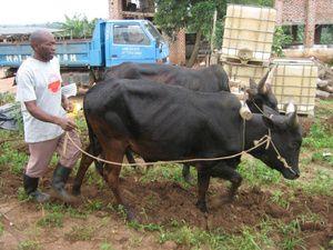 Interesserer du dig for landbrug? Vil du gerne hjælpe folk i Afrika med din erfaring og viden?