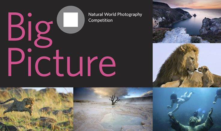 BigPicture Natural World Photography Competition #photography